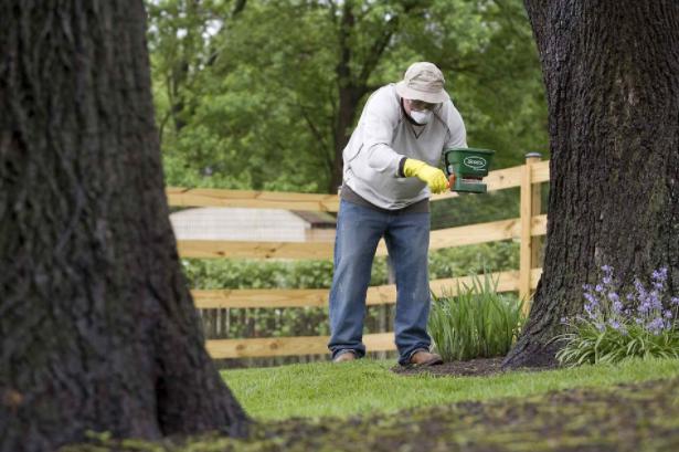 Spraying Fruit Trees